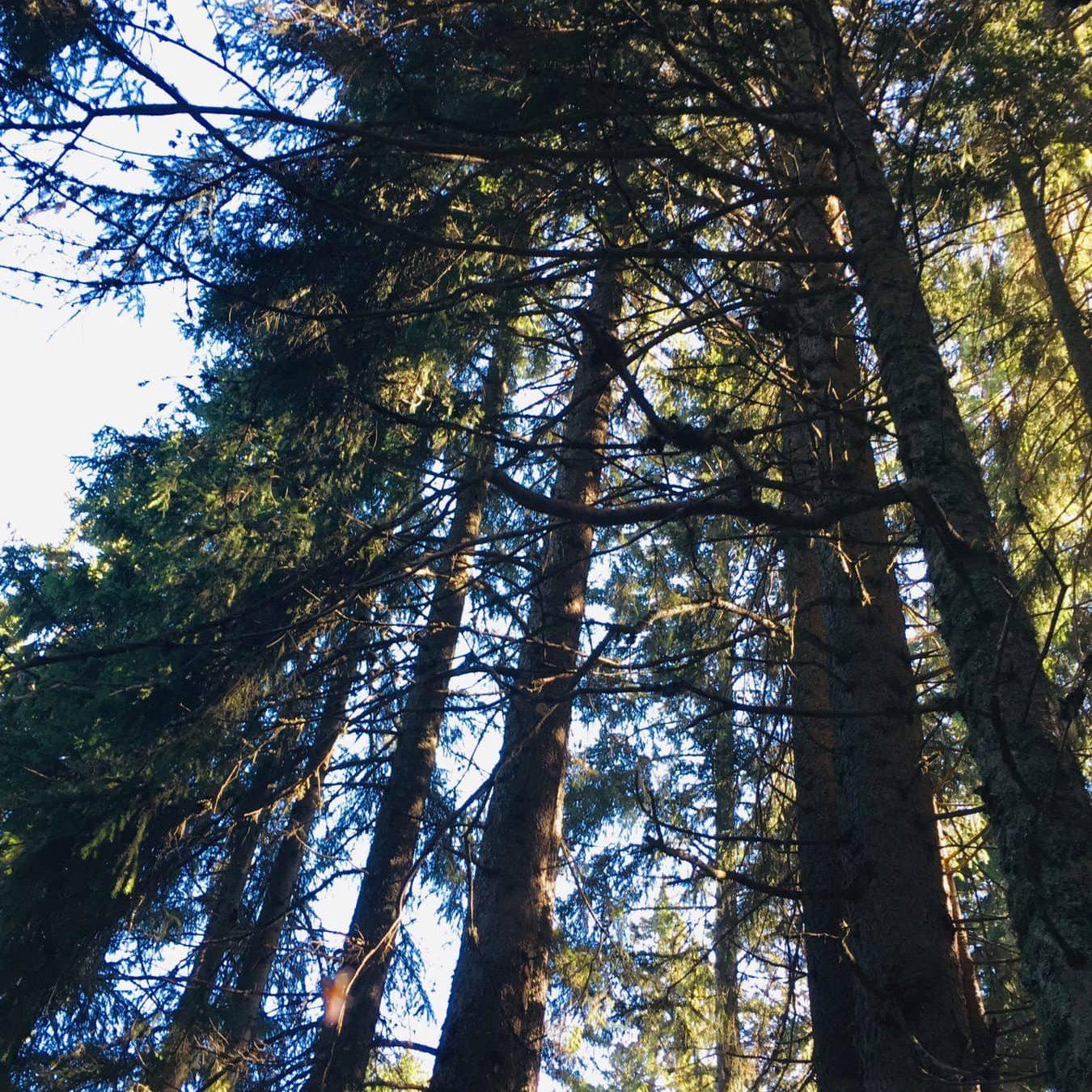 Virtual Forest Yoga Studio